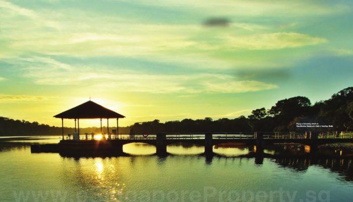 MacRitchie Reservoir near JadeScape Singapore