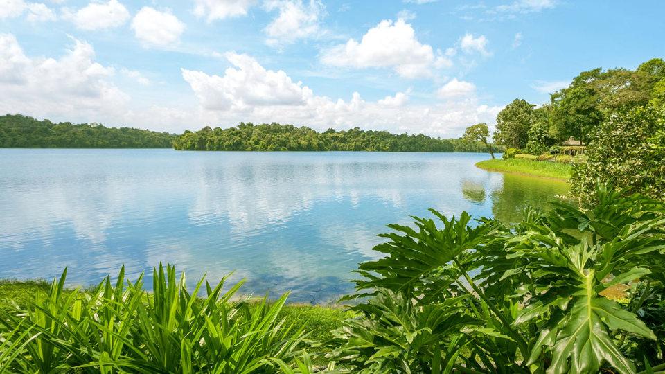 Singapore Nature Reserves . Upper Pierce Reservoir